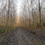 Betévedtem az erdőbe…