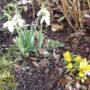 Tavasz a télben…